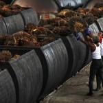 Europa limita ahora los biocombustibles por el daño medioambiental
