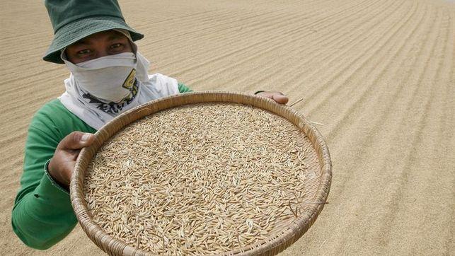 El aumento de los niveles de CO2 reduce el valor nutricional del arroz