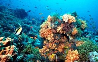 Un colapso en la biodiversidad será inminente si no se toman medidas para prevenir la pérdida de especies en los trópicos