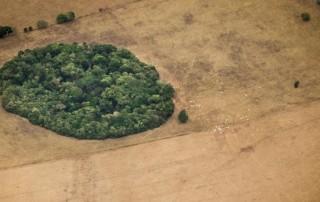 Estamos arrasando con la solución al cambio climático: los bosques