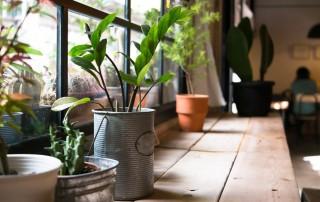 Plantas para mejorar la calidad del aire
