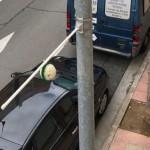 Así son las 'bolas de musgo' que «respiran» el aire de Logroño