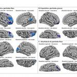 La contaminación en el embarazo se asocia con menor capacidad cognitiva en los hijos