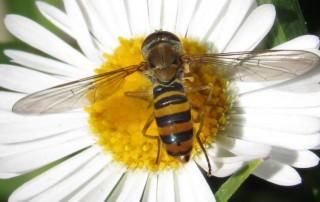 En Roma las abejas ayudan a medir la contaminación del aire