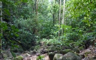 ¿Quiénes protegen los bosques secos del Caribe?
